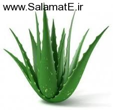 aloevera (1)