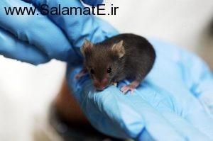 آیا می دانستید پروتئین موش میتواند مردان نابارور را نجات دهد ؟
