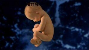 این آلودگی ها باعث سقط حتمی جنینتان می شود