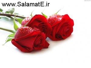 افزایش باور نکردنی مقاومت بدن با گل رز